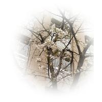 理事長ブログ | 麴町学園女子でなりたい自分を見つけ、実現する | Page 3